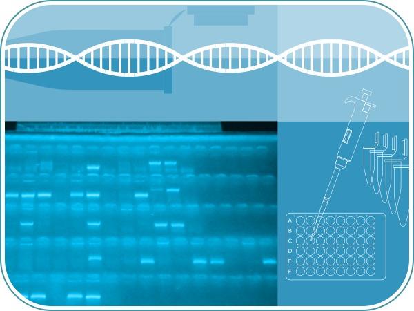 PCR convencional online
