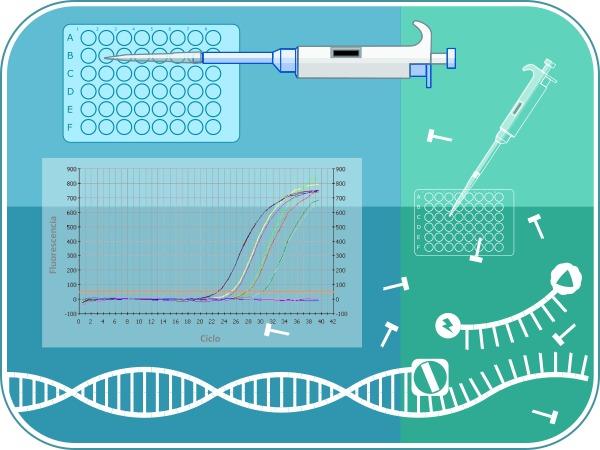 Curso PCR Tiempo Real online